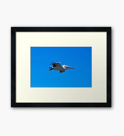 Blue Glider Framed Print