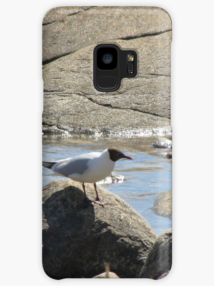 Gull on stone live somewhat by PVagberg