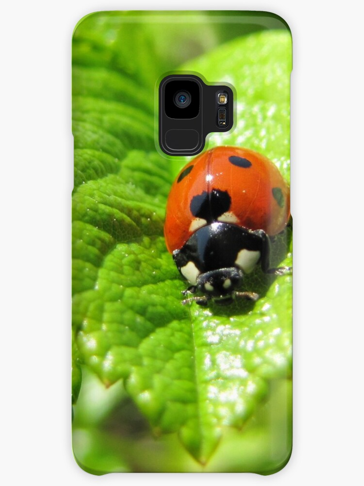 Ladybug walked on the leaf like never before 2 by PVagberg