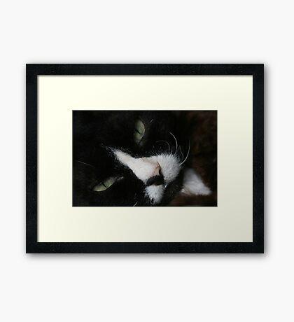 Diablo wants to sleep Framed Print