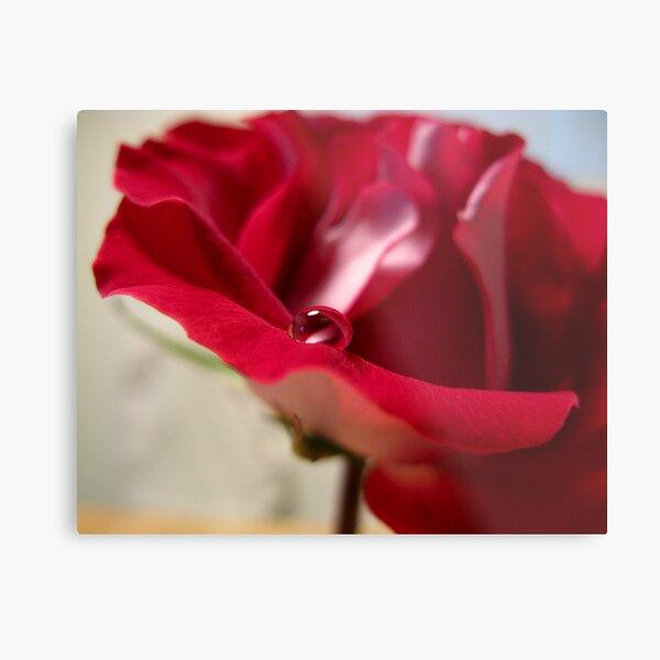 Red Rose Drops IV Metal Print