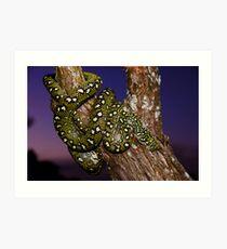 Diamond Python (Morelia spilota spilota) Art Print