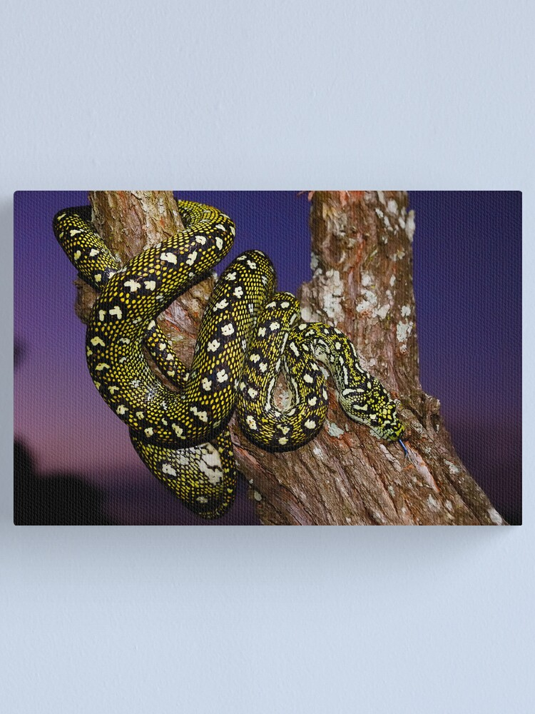 Alternate view of Diamond Python (Morelia spilota spilota) Canvas Print