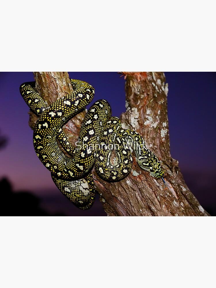 Diamond Python (Morelia spilota spilota) by ShannonPlummer