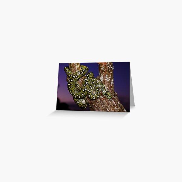 Diamond Python (Morelia spilota spilota) Greeting Card