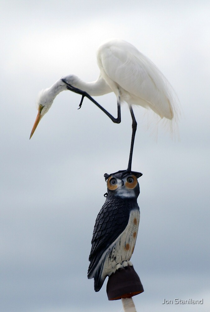 The Egret And The Owl II by Jon Staniland