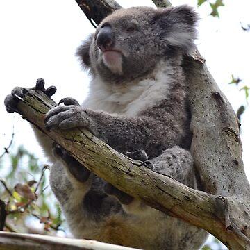 Koala by MiMoCreative