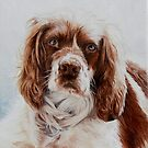Springer Spaniel by Pauline Sharp