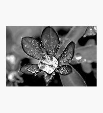 Lupin Diamond Photographic Print