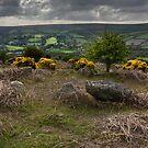 Dartmoor View by M G  Pettett