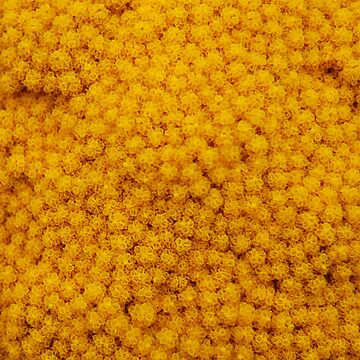 Big Great Ball Of Yellowy Goodness by MrJintro