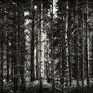 Forest by Joel Tjintjelaar