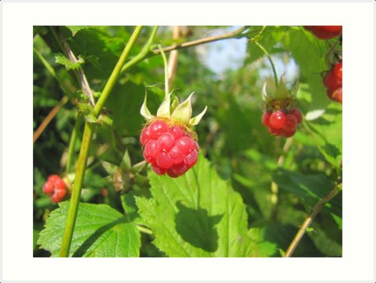 Tasty Raspberries by PVagberg