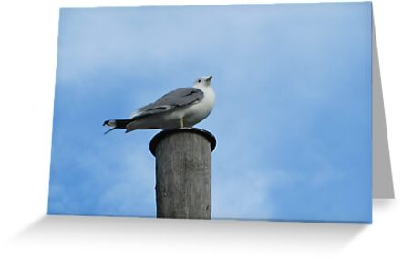 Seagull on post by PVagberg