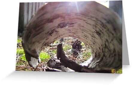 Roll of birch-bark by PVagberg
