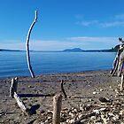 Treibholz-Schutz - Motutere Bucht, Taupo, NZ von CleverCharles