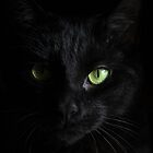Black Cat Face by professorjaytee