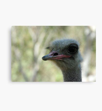 Ostrich Canvas Print
