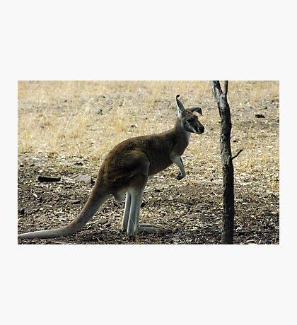 kanga Photographic Print