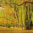 1854 Autumn splendor by Hans Kawitzki
