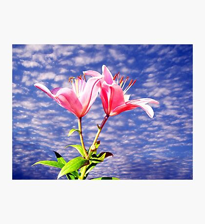 Summertime Lillies Photographic Print