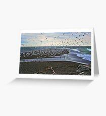 Gull Point Greeting Card