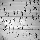 Hitchcock birds by Victor Bezrukov