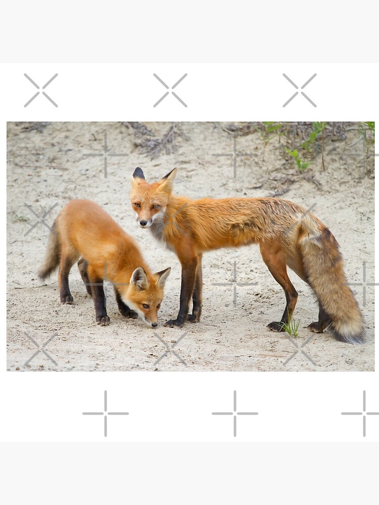 Red fox family by darby8