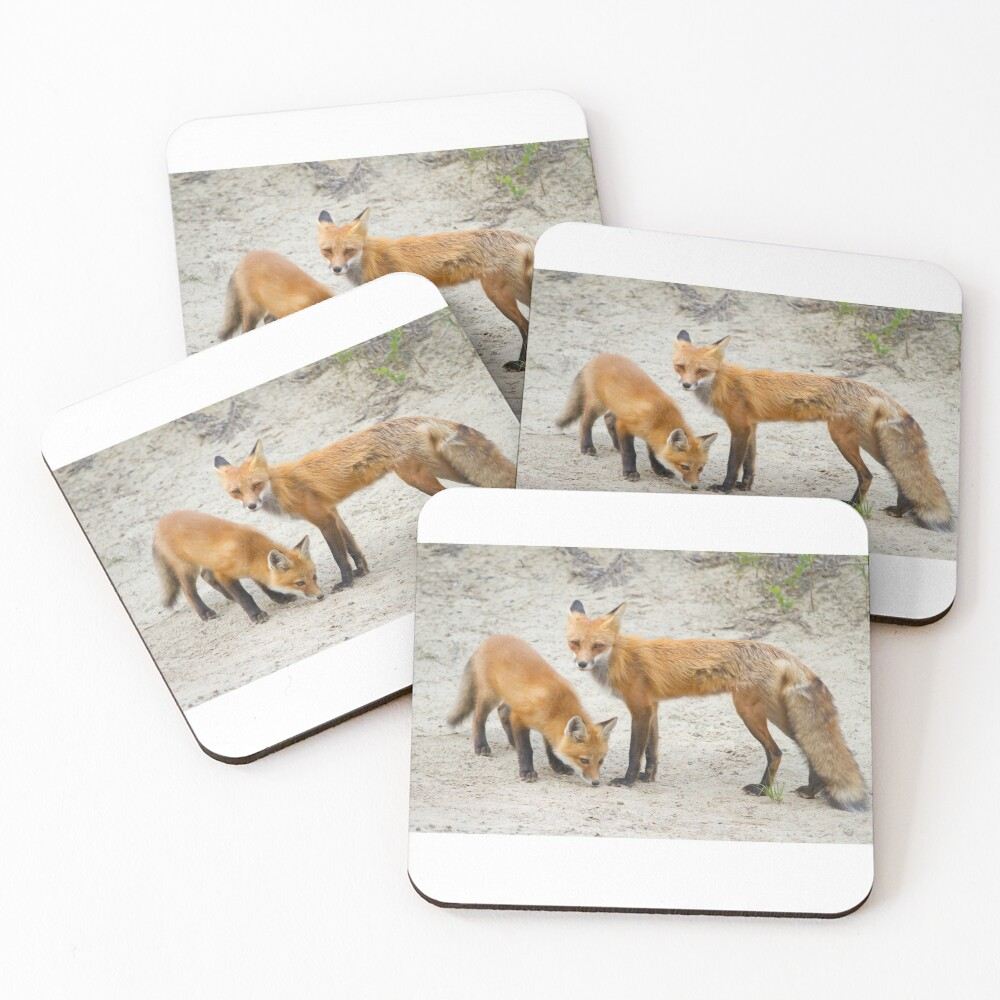 Red fox family Coasters (Set of 4)