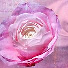 Pink Rose with Text by TJ Baccari Photography