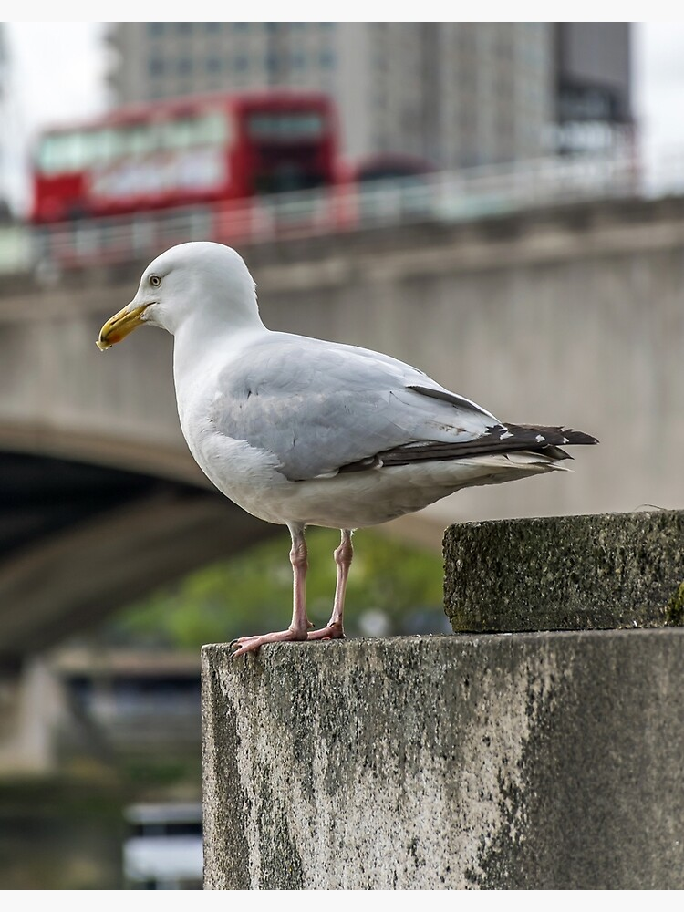 A seagull in London by tdphotogifts