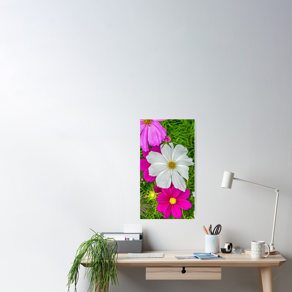 White and pink flowers Poster