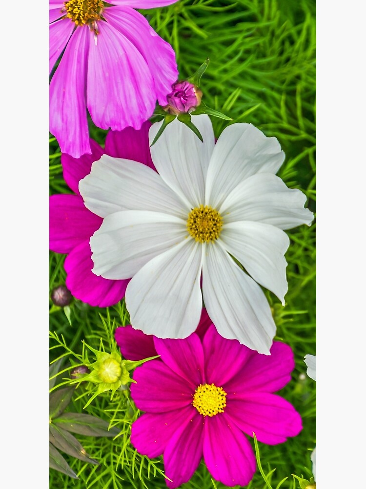 White and pink flowers by tdphotogifts