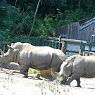 White Rhinos by brucemlong