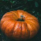 Pumpkin Outdoors By Bush by PatiDesigns