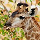 GIRAFFE AND .... AUTUM by Magriet Meintjes