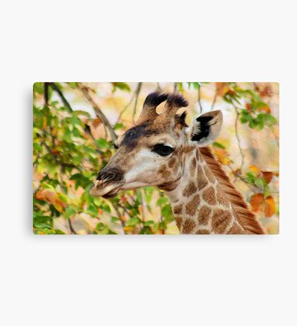 GIRAFFE AND .... AUTUM Canvas Print