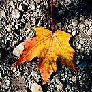 Autumn Leaf by justminting