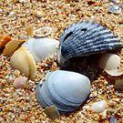 Shells by Hayley Barker