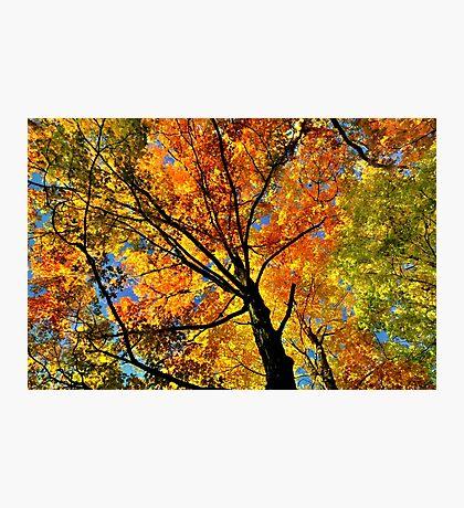 Fall Gamma  Photographic Print