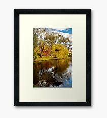 Larz Anderson park guest  Framed Print