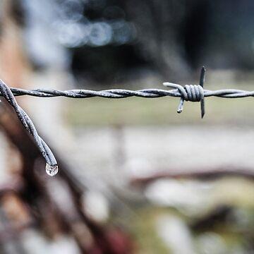 Prouses Fence. Waratah Tasmania by taspaul