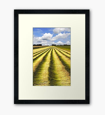 Fields of flax Framed Print