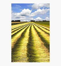 Fields of flax Photographic Print