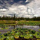 Lost Lake  by Valentina Gatewood