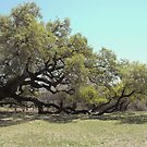 Tired Old Tree  by Susan Russell