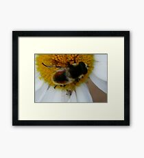 Bumble Bee Framed Print