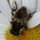 Bumble Bee 2 by MaeBelle