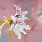Daylily in Pink. by Margaret Stevens