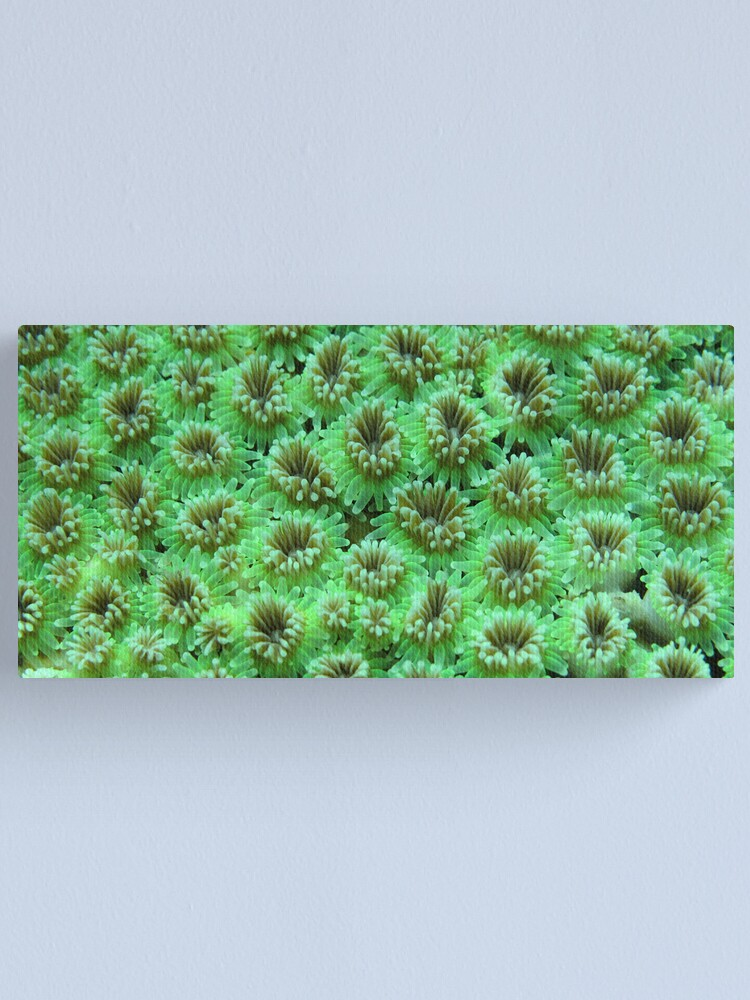 Alternate view of Green Galaxy Canvas Print